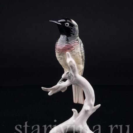 Фарфорвая статуэтка птицы Горихвостка, Karl Ens, Германия, сер. 20 в.