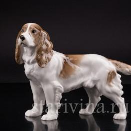 Фарфоровая статуэтка собаки Спаниель, Hutschenreuther, Германия, 1938-55 гг.